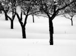 Poems of snow  Japanese (original) / English